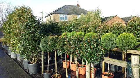 Feature Plants Essex