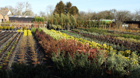 Wholesale Garden Nursery Colchester
