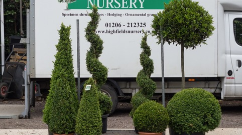 Mixed Topiary