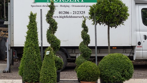 Topiary Plants, Highfields Nursery
