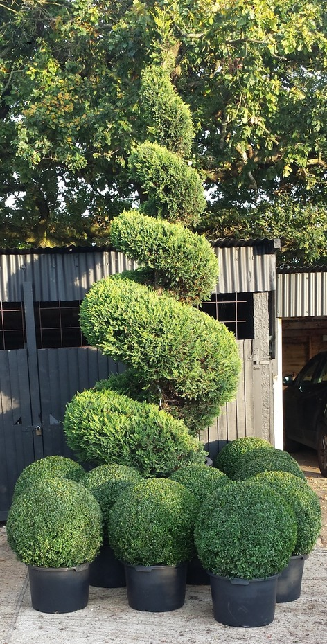 Topiary selection
